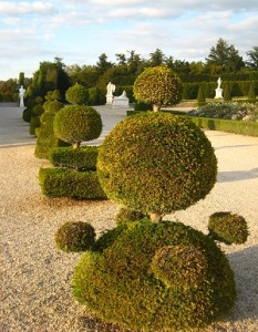 Topiary in Garden of Versailles